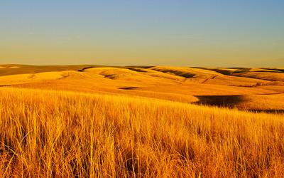 Fields of dry grass wallpaper