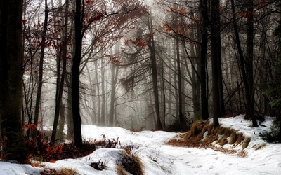 First snow over the autumn forest Wallpaper