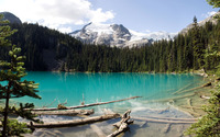 Floating logs in turquoise mountain lake wallpaper 1920x1200 jpg