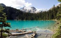 Floating logs in turquoise mountain lake wallpaper 1920x1200 jpg
