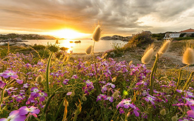 Flowers rising to the sunset wallpaper