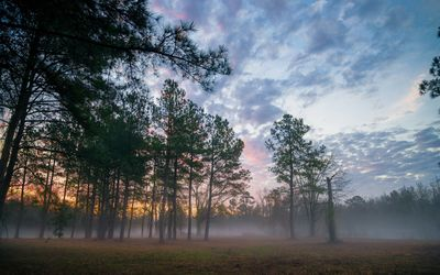 Fluffy sunset clouds above the foggy forest wallpaper