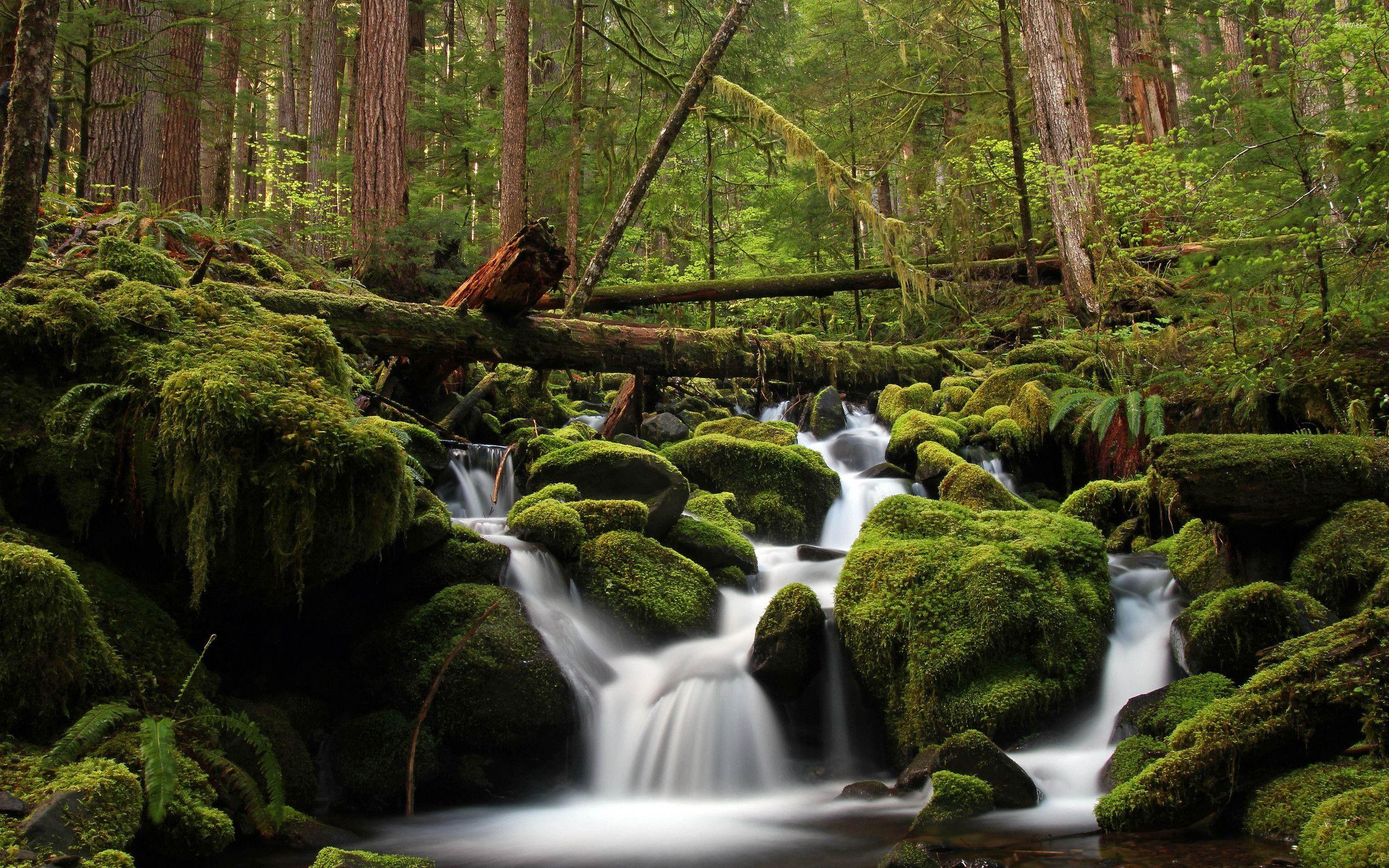 водопад деревья камни загрузить