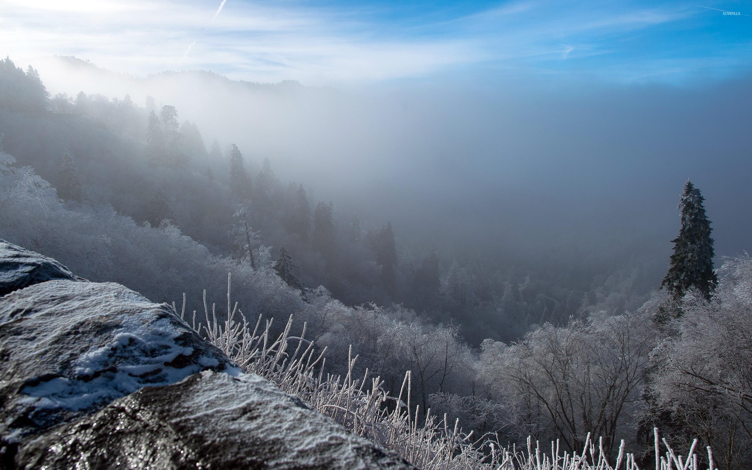 Foggy Sunrise In The Winter Wallpaper WallDevil