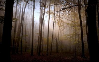 Foggy autumn forest [6] wallpaper
