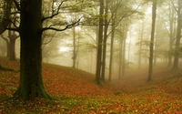 Foggy autumn forest [4] wallpaper 1920x1200 jpg