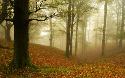 Foggy autumn forest [4] wallpaper