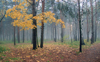 Foggy autumn forest wallpaper 2560x1600 jpg