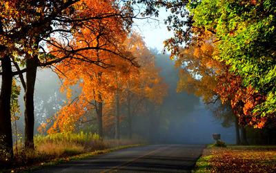 Foggy autumn forest [2] wallpaper