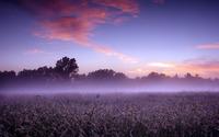 Foggy field wallpaper 2560x1600 jpg