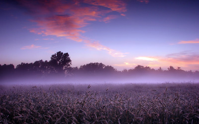 Foggy field wallpaper