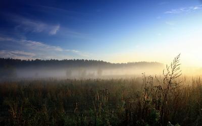 Foggy field [2] wallpaper