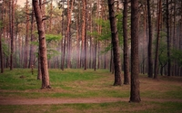 Foggy forest wallpaper 1920x1200 jpg