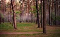 Foggy forest wallpaper 1920x1200 jpg