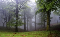 Foggy forest [2] wallpaper 1920x1200 jpg