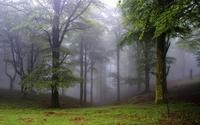 Foggy forest [2] wallpaper 1920x1200 jpg