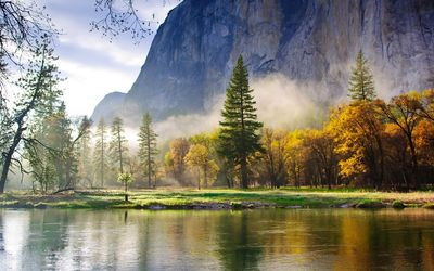 Foggy forest on the river side Wallpaper