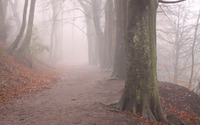 Foggy forest path wallpaper 2560x1600 jpg