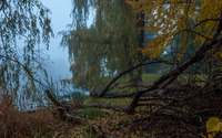 Foggy lake by the forest wallpaper 2560x1600 jpg