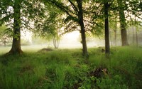 Foggy morning in the forest wallpaper 2560x1600 jpg