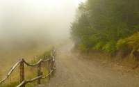 Foggy path by the forest wallpaper 1920x1200 jpg