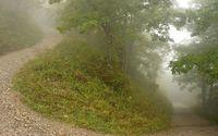 Foggy path through the forest wallpaper 1920x1080 jpg