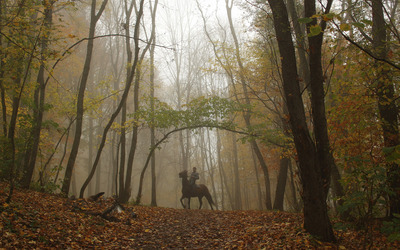 Foggy path to the horseman wallpaper