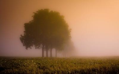 Foggy tree wallpaper