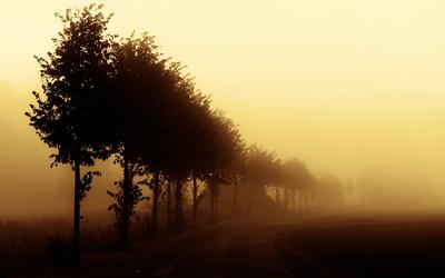 Foggy trees wallpaper