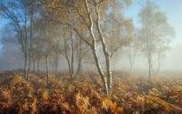 Foggy trees [2] wallpaper 2560x1600 jpg