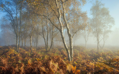Foggy trees [2] wallpaper