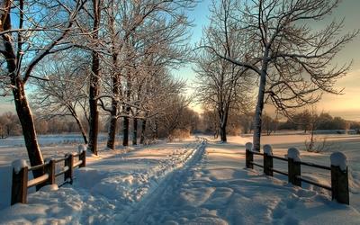 Footprints through the snowy path Wallpaper