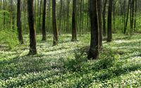 Forest [2] wallpaper 2560x1600 jpg