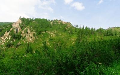 Forest hills wallpaper