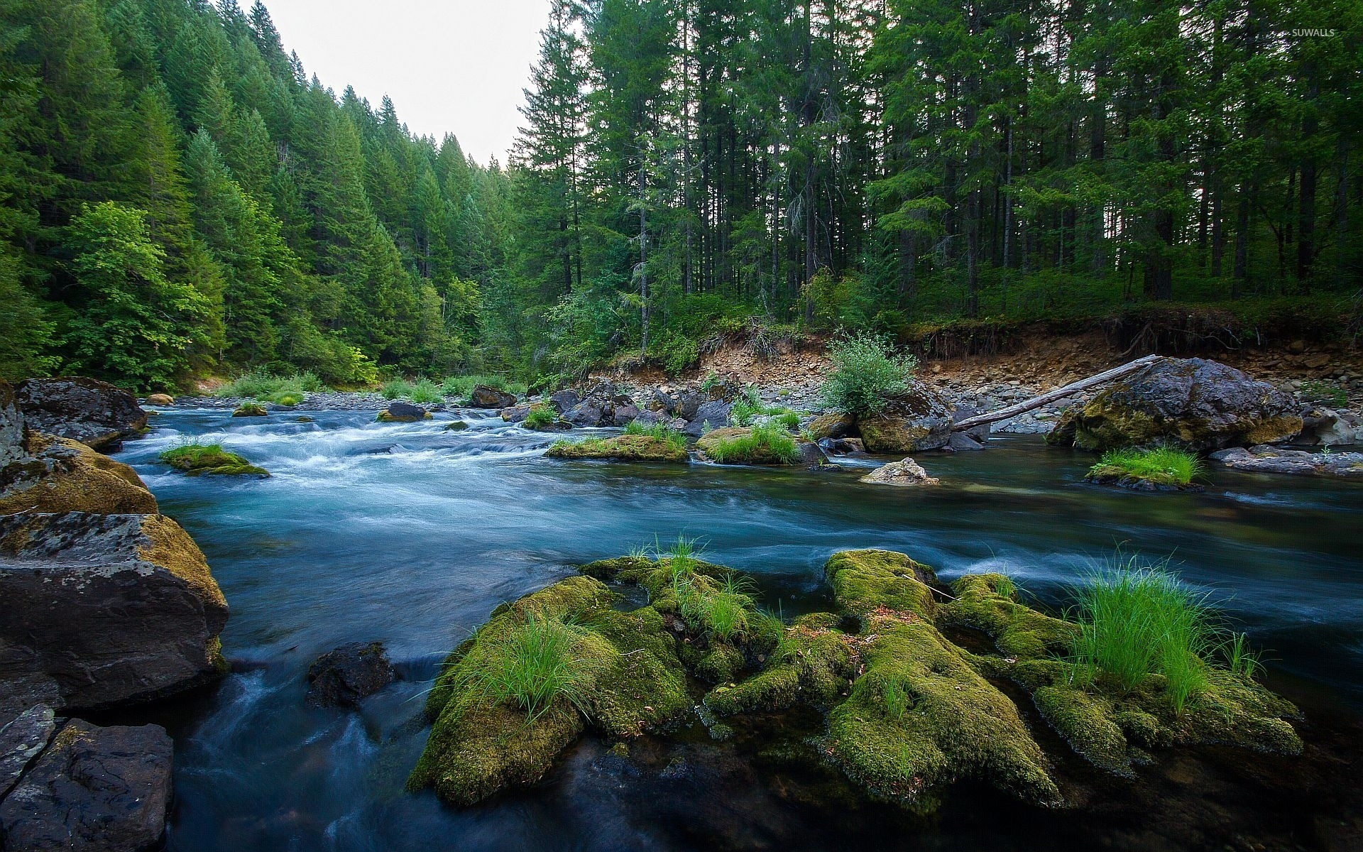 Forest River 2 Wallpaper Nature Wallpapers 46210