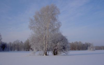 Frosty trees wallpaper