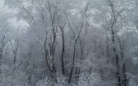 Frosty woods wallpaper 2560x1600 jpg