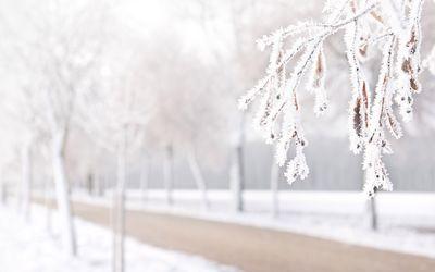 Frozen branch Wallpaper