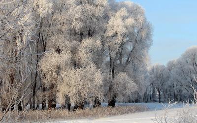 Frozen forest wallpaper