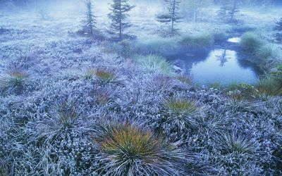 Frozen grass in the winter wallpaper