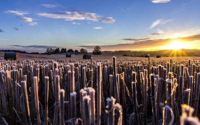 Frozen straw at sunrise wallpaper