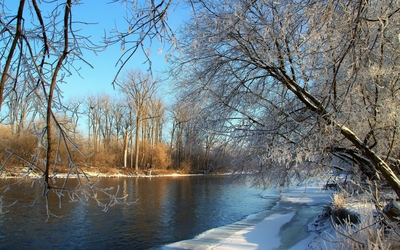 Frozen trees by the river on a sunny day wallpaper