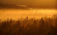 Golden forest wallpaper 2560x1600 jpg
