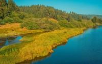 Golden grass on the river shore wallpaper 1920x1200 jpg
