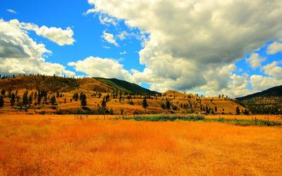 Golden hills wallpaper