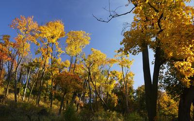 Golden trees wallpaper
