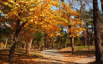 Golden trees in the park wallpaper