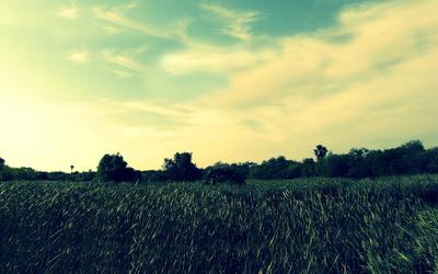 Grass [7] wallpaper