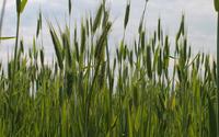 Grass spikes wallpaper 2880x1800 jpg