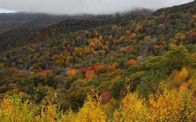 Great Smoky Mountains National Park wallpaper